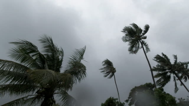 palm trees blowing in wind tropical storm extreme weather typhoon - tornado stock videos & royalty-free footage