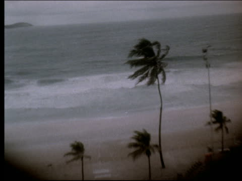 b/w pan palm trees blowing on stormy coastline / rio de janeiro - anno 1999 video stock e b–roll