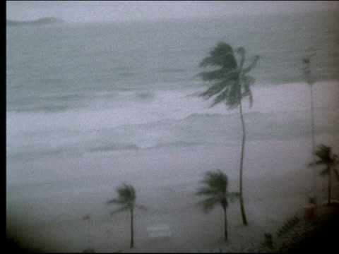 vidéos et rushes de b/w pan palm trees blowing on stormy coastline / rio de janeiro - angle de prise de vue