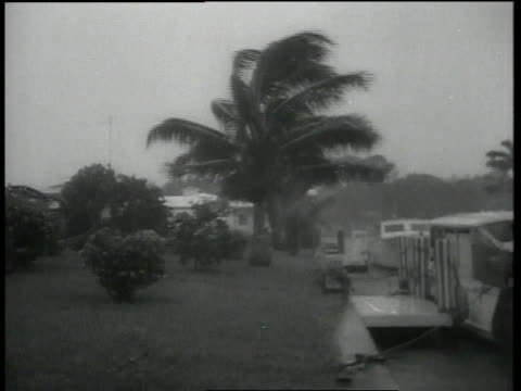 Palm trees blowing violently as hurricane approaches / Miami Florida United States