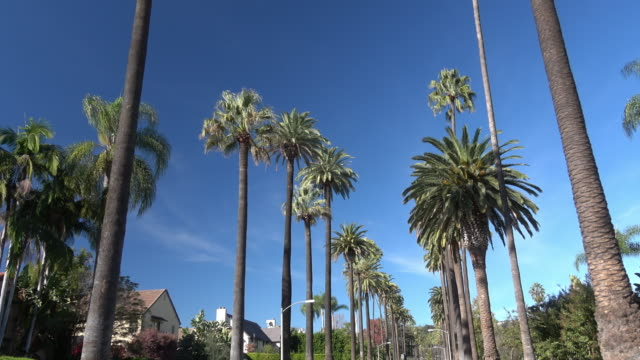 palm trees boulevard - beverly hills stock videos & royalty-free footage