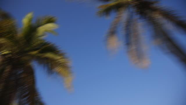 vídeos de stock, filmes e b-roll de palm trees, driving pov - ponto de vista de motorista
