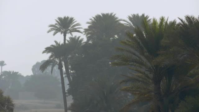stockvideo's en b-roll-footage met palm trees, egypt - bedektzadigen