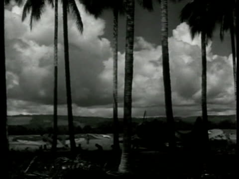 stockvideo's en b-roll-footage met palm trees fg w/ soldiers airplanes resting bg allied airplane taxiing in on island runway turning moving fg pacific campaign pacific front wwii... - 1943