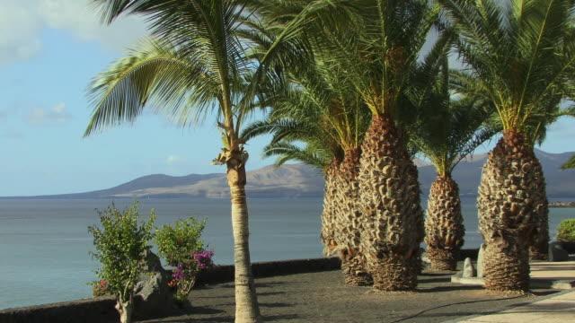 ms, palm trees growing along coastline, puerto del carmen, lanzarote, canary islands, spain - fan palm tree stock videos & royalty-free footage