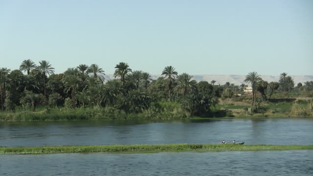 ws, pan, palm trees growing along nile river, egypt - river nile stock videos & royalty-free footage