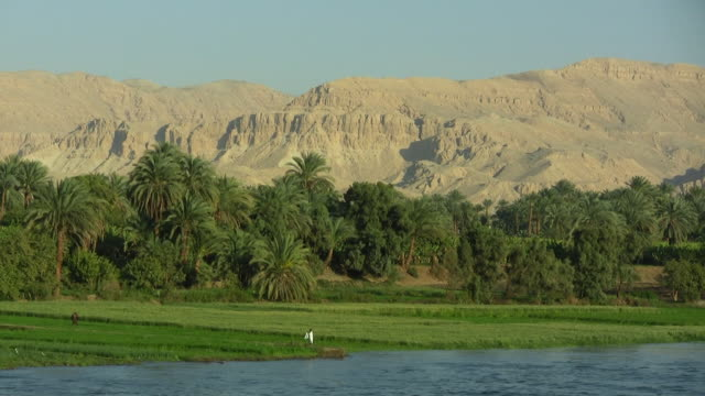 ws, pan, palm trees growing along nile river, hills in background, egypt - river nile stock videos & royalty-free footage