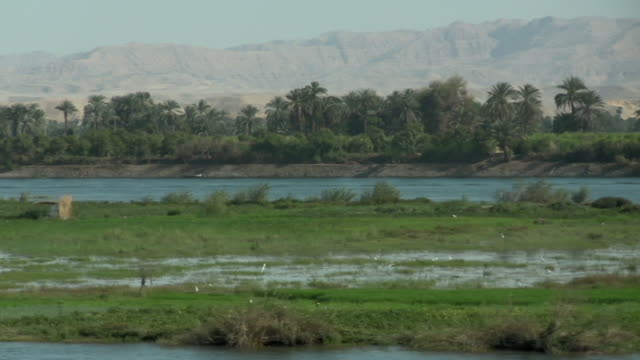 WS, PAN, Palm trees growing along Nile River, hills in background, Egypt