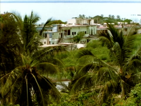 ms, ha, palm trees, houses in background, nuevitas, cuba  - palma nana video stock e b–roll