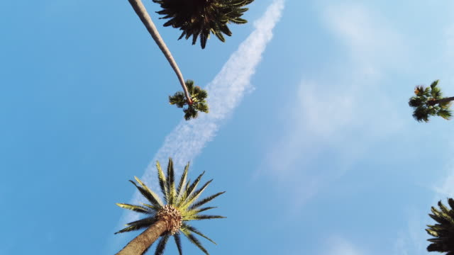 vídeos de stock e filmes b-roll de palm trees in beverly hills - bulevar