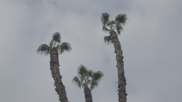vidéos et rushes de palm trees in fresno against cloudy sky, montage - fresno