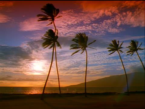vidéos et rushes de palm trees in front of ocean at sunset / maui, hawaii - angle de prise de vue