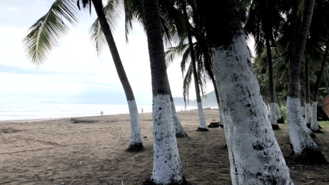 palm trees in jaco, costa rica - costa rica stock videos and b-roll footage