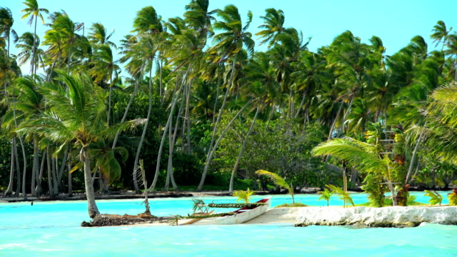 palm trees in paradise aquamarine lagoon bora bora - polynesian ethnicity stock videos & royalty-free footage