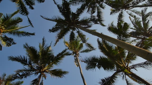 palm trees in pasut beach / tabanan, bali, indonesia - palm leaf stock videos & royalty-free footage