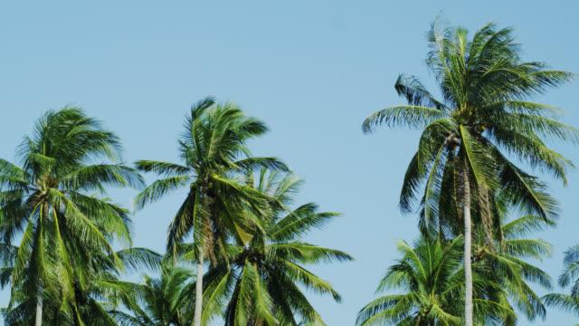 Palm Trees in Phang Nga, Phuket, Thailand