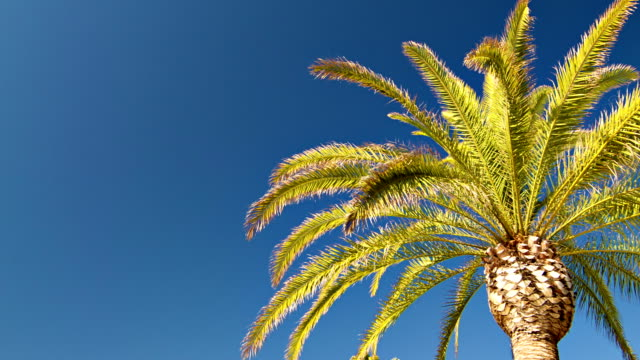 palm trees in retro style - santa barbara california stock videos & royalty-free footage