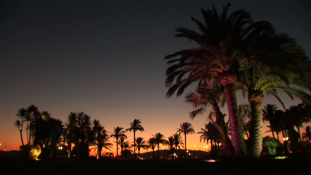 stockvideo's en b-roll-footage met hd: palm trees in the night - lengte