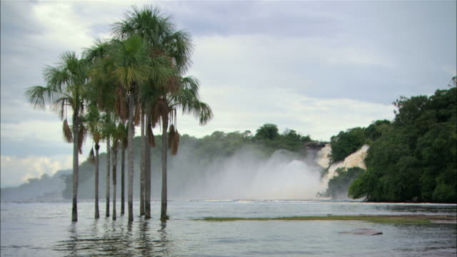 ws palm trees in water with waterfall in background / venezuela. - haltbarkeit stock-videos und b-roll-filmmaterial