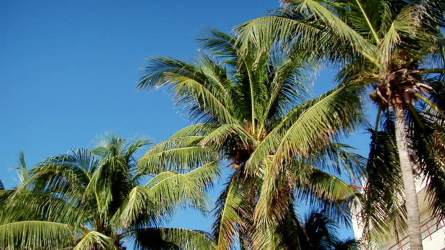 ms pan la palm trees, isla mujeres, quintana roo, mexico - quintana roo stock videos and b-roll footage