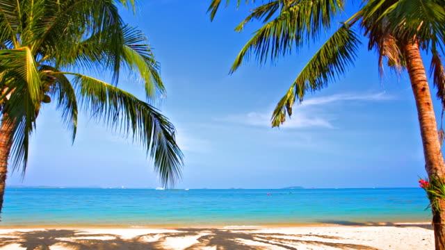 vídeos de stock e filmes b-roll de beijo de árvores de palma - folha de palmeira