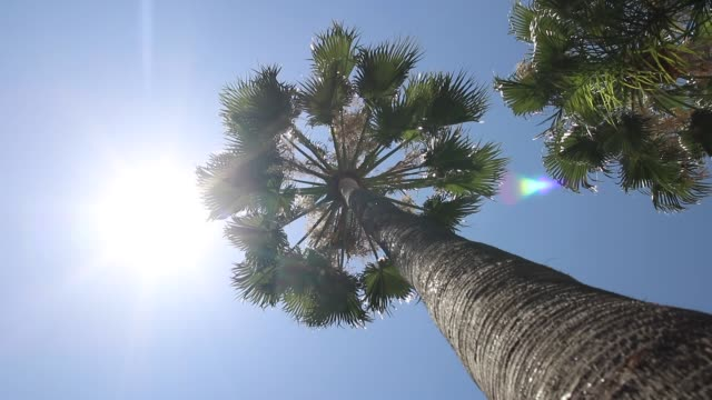 palm trees. los angeles - palm tree stock videos & royalty-free footage