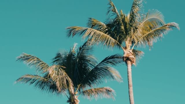 Palm trees moving with the wind