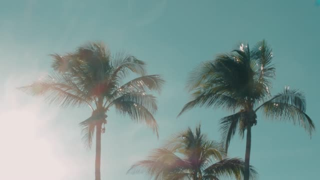palm trees moving with the wind - tropical resorts stock videos & royalty-free footage