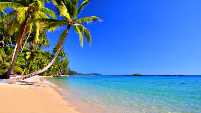 palm trees near sea water on tropical beach - palm tree stock videos & royalty-free footage