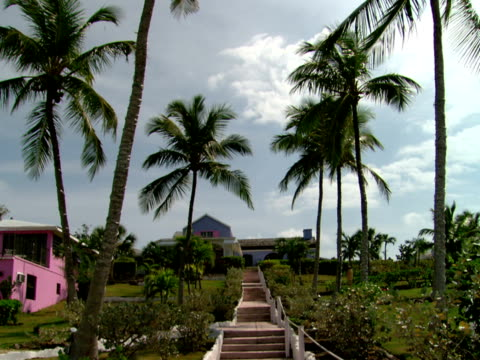 stockvideo's en b-roll-footage met td,  ms,  palm trees next to steps leading to house,  harbour island,  bahamas - waaierpalm