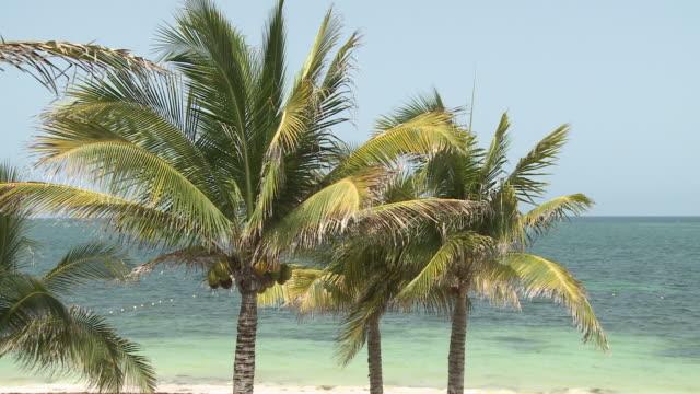 zo, ms, palm trees on beach, playa del carmen, quintanaroo, mexico - palma nana video stock e b–roll