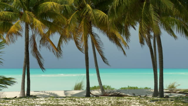 vidéos et rushes de ms, palm trees on beach, turquoise ocean in background, abaco islands, bahamas - bahamas