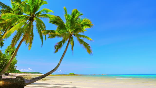 palm trees on beach - palm tree stock videos & royalty-free footage
