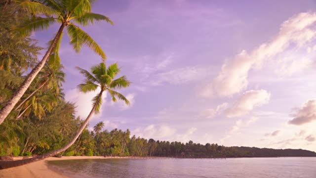 palm trees on beach - fan palm tree stock videos & royalty-free footage
