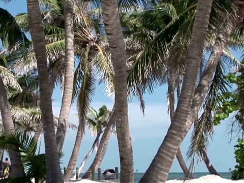 stockvideo's en b-roll-footage met cu, zo, ms, palm trees on beach - waaierpalm