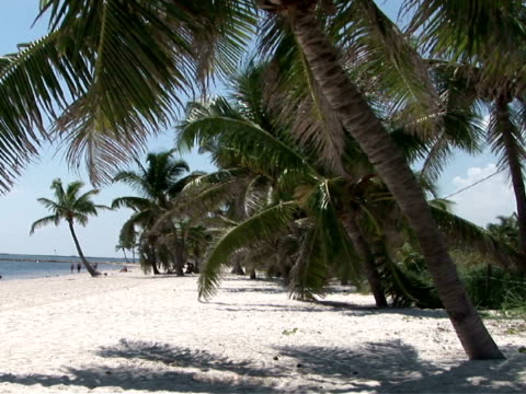 stockvideo's en b-roll-footage met ms, palm trees on beach - waaierpalm