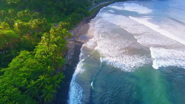 stockvideo's en b-roll-footage met palm trees on oahu coast, aerial view - oahu