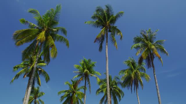 palm trees on phi phi, koh phi phi, thailand - 披披群島 個影片檔及 b 捲影像