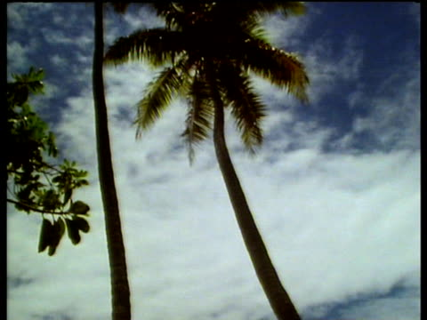 Palm trees on Tahitian beach pan to man disembarking from rowing boat and walking up beach.