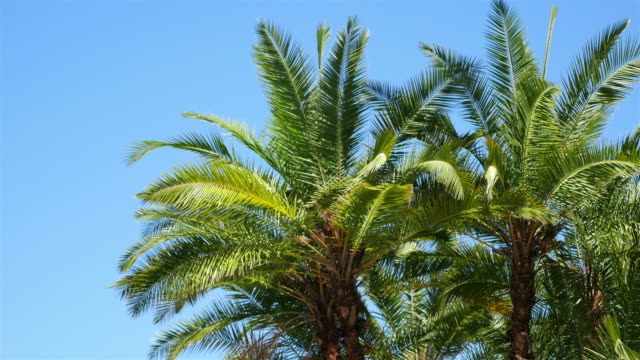 palm trees on the blue sky in 4k - palm leaf stock videos & royalty-free footage