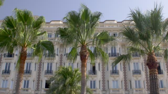 vidéos et rushes de palmiers sur la croisette. cannes. côte d'azur. - palmier