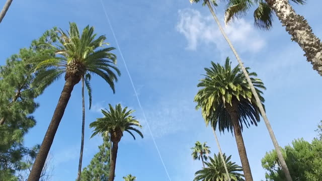 palm trees on the streets of la - low angle view stock videos & royalty-free footage