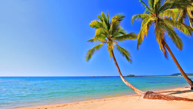palm trees on the tropical beach - palm tree stock videos & royalty-free footage