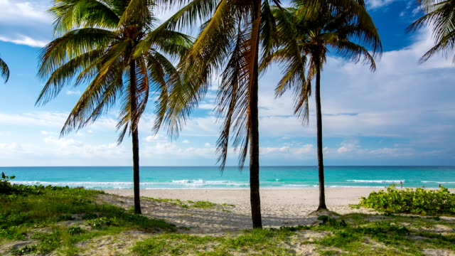 Palm Trees on Tropical Beach in Varadero , Cuba