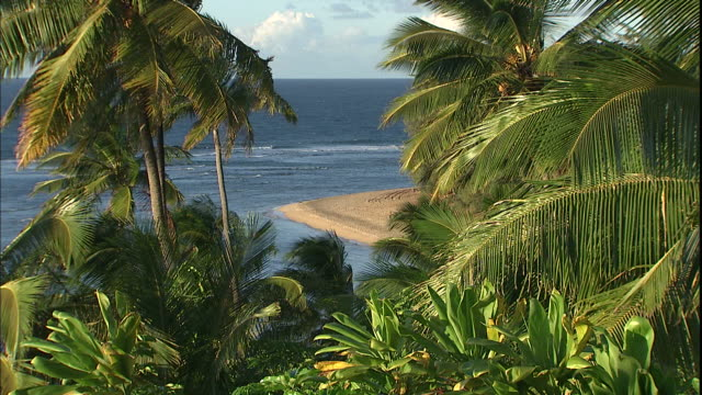 palm trees overlooking a tropical beach sway in the wind. - isola di kauai video stock e b–roll