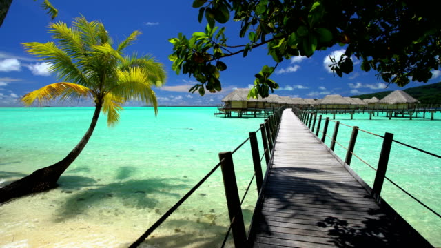 palm trees overwater walkway luxury bungalows bora bora - polynesian ethnicity stock videos & royalty-free footage