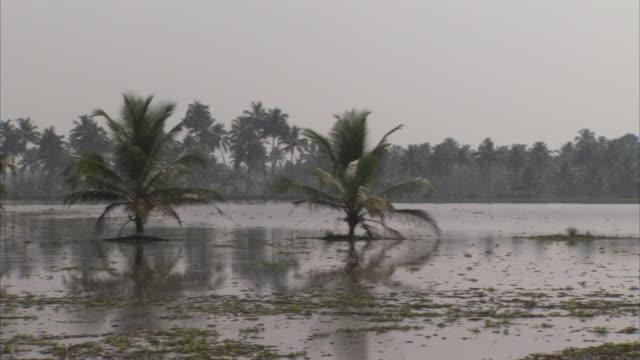 vídeos de stock, filmes e b-roll de palm trees protrude from a marsh. - pântano salgado