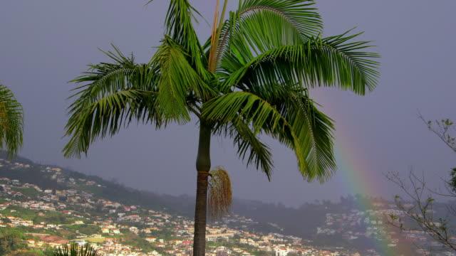 palm trees & rain - single tree stock videos & royalty-free footage