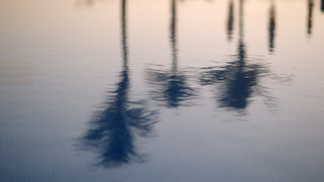 vidéos et rushes de palm trees reflected in water at luxury resort pool - dubai