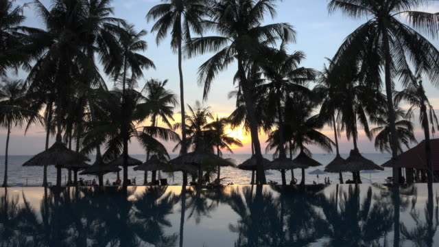 vidéos et rushes de palm trees reflecting in pool at sunset at sea - palmier